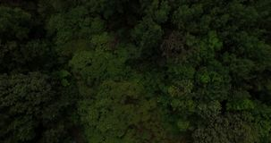 Aerial view on tree tops of a deep forest. On a summer day stock video