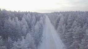 Aerial view of tree tops of snow-covered forest. The road in the forest. The movement of the camera back stock video footage