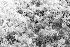Aerial view of trees covered by snow in a forest, on the side of Subasio mountain Umbria, creating a kind of abstract. Aerial view of trees covered by snow in a Royalty Free Stock Photography