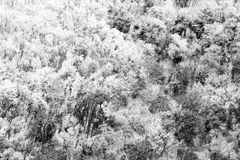 Aerial view of trees covered by snow in a forest, on the side of Subasio mountain Umbria, creating a kind of abstract. Aerial view of trees covered by snow in a Stock Photo