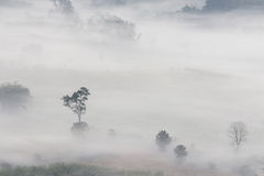 Aerial view of trees in morning fog Stock Photography