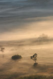 Aerial view of trees in morning fog Stock Image