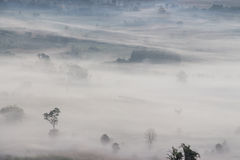 Aerial view of trees in morning fog Royalty Free Stock Photography