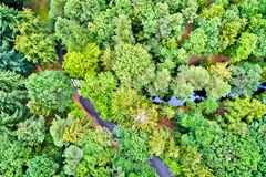 Aerial view of trees and a road in the Vosges Mountains, France Royalty Free Stock Images