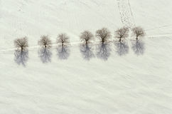 Aerial view of trees and shadows on snow Stock Photo