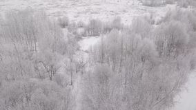 Aerial view of trees in the snow in winter. Camera movement from top to bottom stock video footage