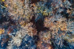 Aerial view of trees in the Vosges Mountains in autumn Stock Images