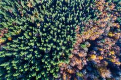 Aerial view of trees in the Vosges Mountains in autumn Royalty Free Stock Photo