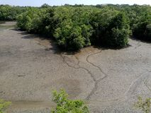 Aerial view of tropical coastal mangrove. A landscape photograph showing the beautiful scenery of some tropics seashore mangroves forest at low tide, with small royalty free stock images