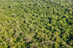 Aerial view of tropical forest Royalty Free Stock Images