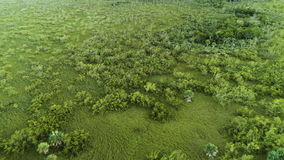 Aerial view of tropical green rain-forest near golf course in Punta Cana, Dominican Republic.  stock video