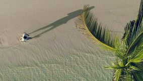 Aerial view of tropical island beach. Coconut palm tree on washing sea waves.  stock video footage