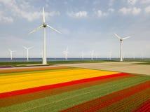 Aerial view of tulip fields and wind turbines in the Noordoostpolder municipality, Flevoland. Netherlands Stock Photo