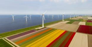 Aerial view of tulip fields and wind turbines in the Noordoostpolder municipality, Flevoland. Netherlands Stock Image