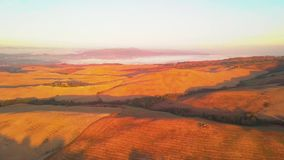 Aerial view of tuscany cultivated hills at sunrise val d`orcia. Aerial view of Italy. Drone shoot stock video footage