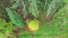 Aerial View Up to the Top of the Trees in Early Autumn. Drone aerial footage flying from the red fields to the treetops stock video