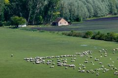 Aerial view on the valley with a flock of sheep royalty free stock images