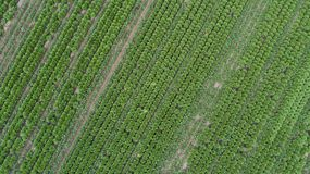 Aerial view of the vegetable field Royalty Free Stock Photos