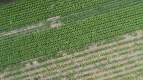 Aerial view of the vegetable field Stock Image