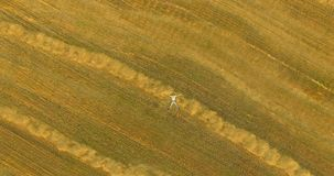 Aerial view. Vertical motion flight over man lying on yellow wheat field stock video footage