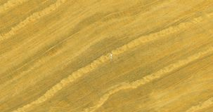 Aerial view. Vertical motion flight over man lying on yellow wheat field stock footage