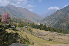 Aerial view of village and green and colorful rice field terraces, Nepal Stock Photos