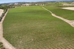 Aerial view vine yard Stock Image