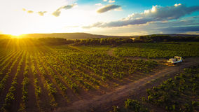 Aerial View Of A Vineyard stock photos