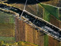Aerial view of vineyard fields during winter in Italy. View fron above stock images