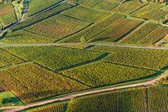 Aerial view of vineyard grape fields in Burgundy region at sunrise. Aerial view of vineyard grape fields in France at sunrise stock images