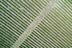 Vineyard aerial view Royalty Free Stock Photography