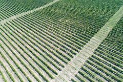 Vineyard aerial view Royalty Free Stock Images