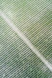 Vineyard aerial view Stock Images