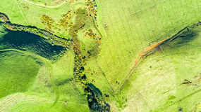 Aerial view on a vineyard on hills near New Plymouth. Taranaki region, New Zealand