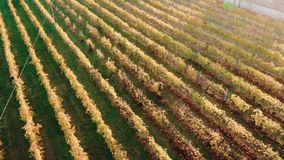 Aerial view Vineyard of Italy in city of Verona sunrise stock footage