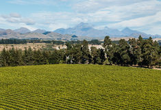 Aerial view of vineyard in Marlborough region in New Zealand Royalty Free Stock Photo