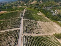 Aerial view of a vineyard. Monferrato, Piedmont, Italy royalty free stock image