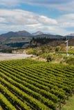 Aerial view of vineyard Stock Image