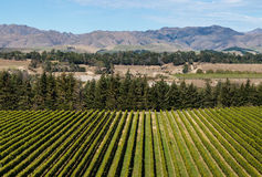 Aerial view of vineyard in New Zealand Royalty Free Stock Photos