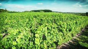 Aerial view of vineyard stock footage