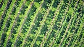 Aerial view of vineyard stock video