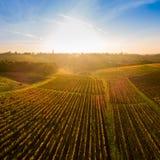 Aerial view, Vineyard Sunrise in autumn, Bordeaux Vineyard, France. Aerial view, Vineyard Sunrise in autumn, Bordeaux Vineyard, Gironde, France stock photography