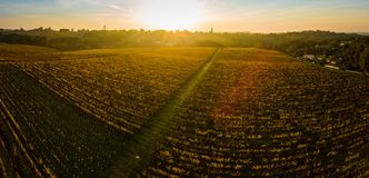 Aerial view, Vineyard Sunrise in autumn, Bordeaux Vineyard, France. Aerial view, Vineyard Sunrise in autumn, Bordeaux Vineyard, Gironde, France royalty free stock photography