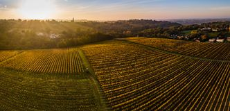 Aerial view, Vineyard Sunrise in autumn, Bordeaux Vineyard, France. Aerial view, Vineyard Sunrise in autumn, Bordeaux Vineyard, Gironde, France stock photos