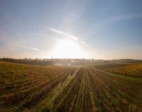Aerial view, Vineyard Sunrise in autumn, Bordeaux Vineyard, France. Aerial view, Vineyard Sunrise in autumn, Bordeaux Vineyard, Gironde, France stock images