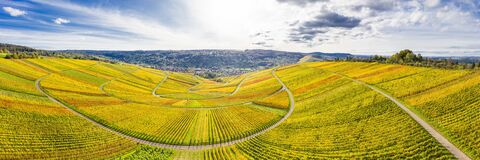 Aerial view of vineyard in valley Remstal in Germany