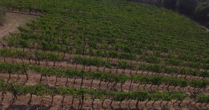 Aerial view of the vineyards stock footage