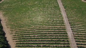 Aerial view vineyards field and mountains 4K video stock video