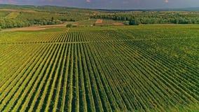 Kutjevo vineyards aerial stock footage