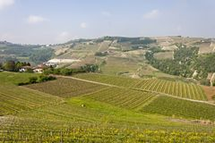 Aerial view of the vineyards of Langhe, Piedmont. stock image